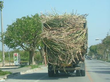 さとうきび畑収穫の トラックだよ。。