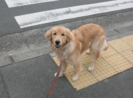 散歩だgo!1