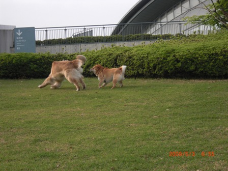 朝の運動公園7