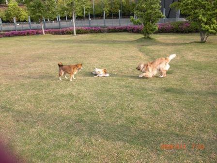 朝の運動公園8