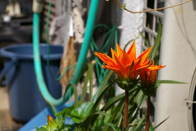 南国っぽい花