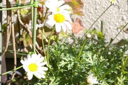 昼下がりの花1