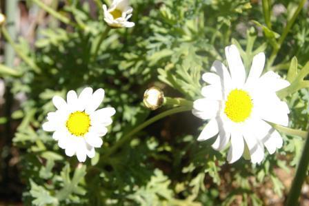 昼下がりの花2