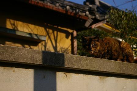 上野公園ネコ
