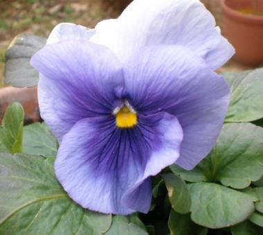 種まきびおらブルー