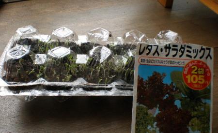 野菜種まき