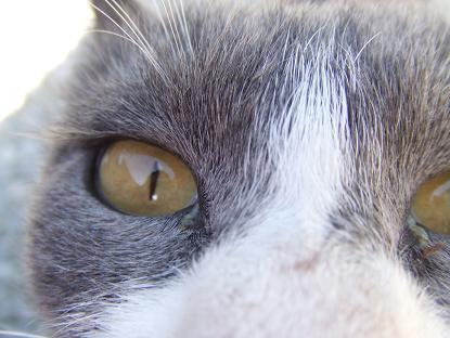オレンジの瞳