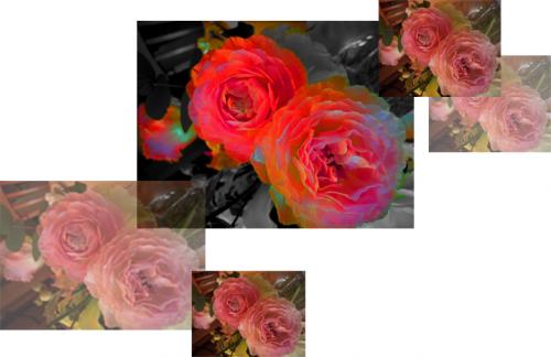 flower_convert_20090324020740.png