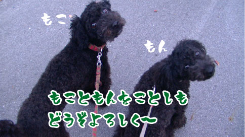 PIC_0854.jpg