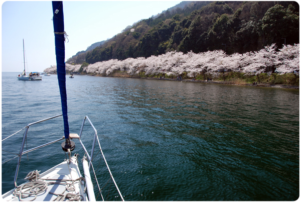 DSC_0153sakura09.jpg