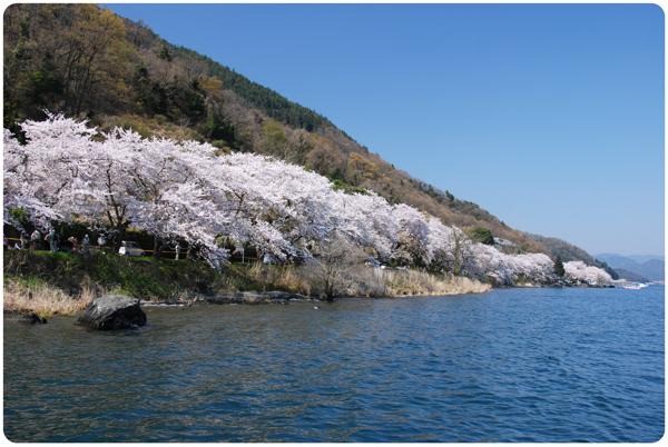 DSC_0204sakura09.jpg