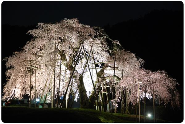 DSC_0282sakura09.jpg