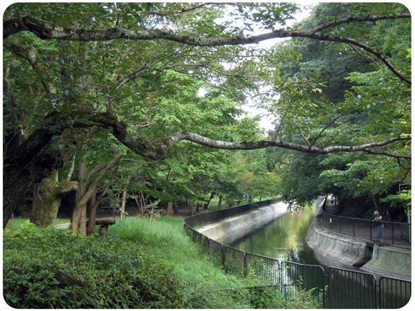 IMG_5870higashiyama.jpg