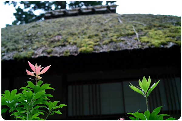 SDIM00690907kyoto.jpg
