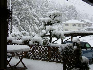 大雪だ~!!