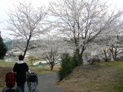 さぐーと桜とベビーカー