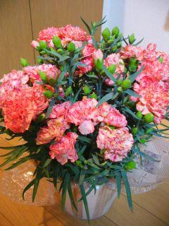 お花が届いたよ!