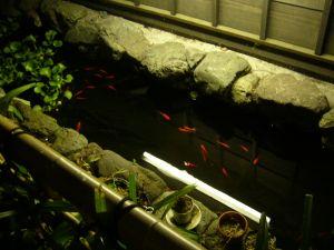 金魚をみて待つ