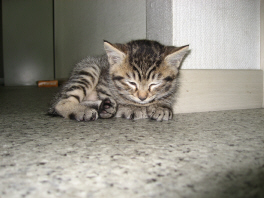 眠たい・・・