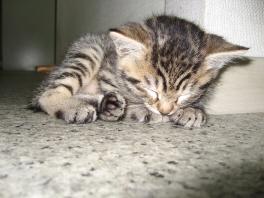 そして 寝た