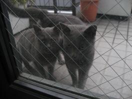 近所のネコちゃんです