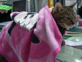 毛布まで・・・
