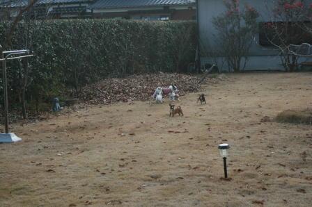 庭で遊ぶ1