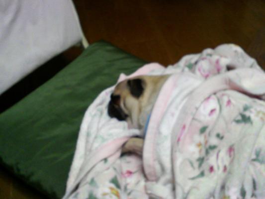 毛布で寝る由紀夫