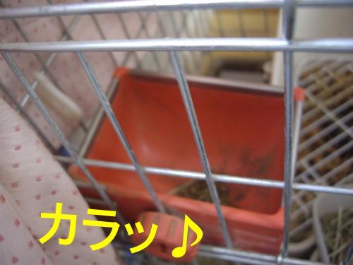 001+(2)_convert_20090304155336.jpg