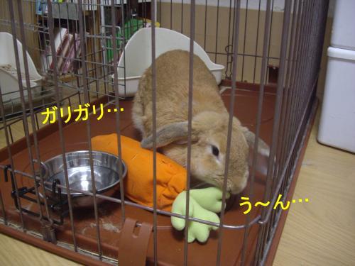 011_convert_20090705100959.jpg