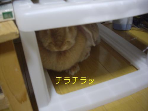 IMGP1033_convert_20090805091323.jpg