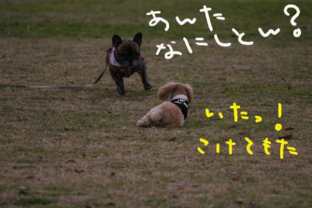 IMG_11.jpg