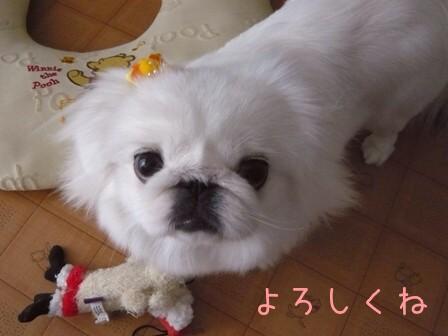 fuwashiro3.jpg