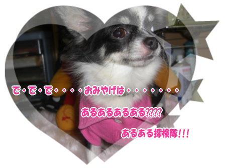 CIMG0599.jpg