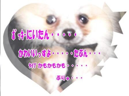 CIMG0603.jpg