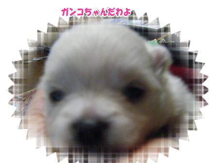 DSCF3079.jpg