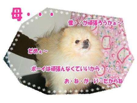 DSCF3326.jpg