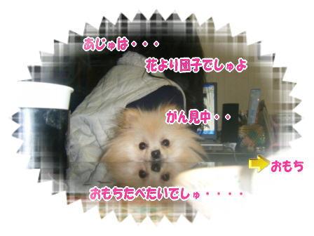DSCF3426.jpg