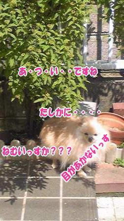 Image041.jpg