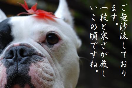 ボク桃太郎です。