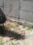 我が家の桜2