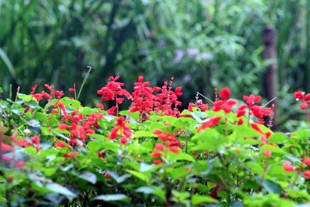 石神井公園6
