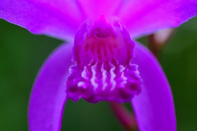散歩道の花2