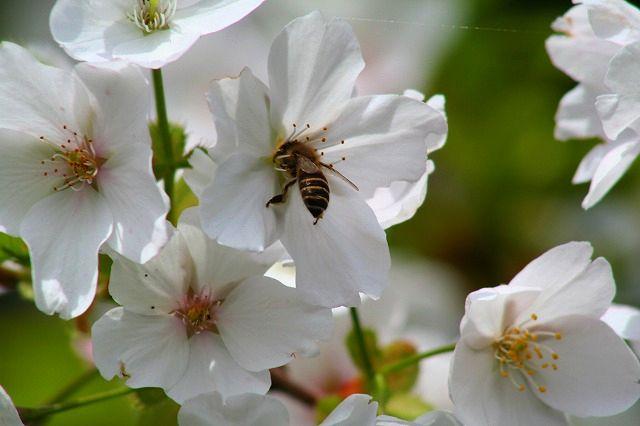 はけの下のハチ