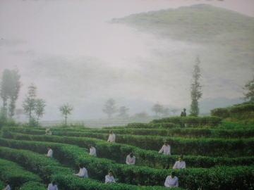 gaoshanchayuan.jpg