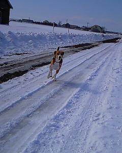 雪道を疾走