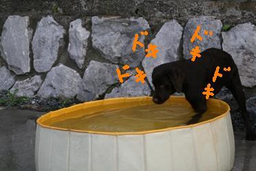 プール (5)