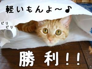 img_1556jpg1うららちゃん