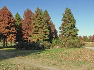 IMG_tree.jpg