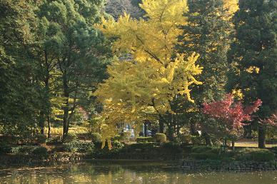 秋の薬師池公園